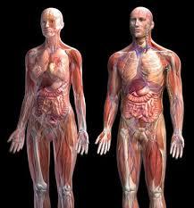 Human Anatomy Pic 249 Best Biology Anatomy Images On Pinterest Medicine Nursing