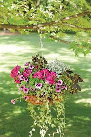 What To Use For Climbing Plants - spectacular container gardening ideas southern living