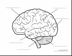 Beautiful Brain Coloring Page Dokardokarz Net Brain Coloring Page
