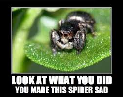 Cute Spider Meme - cute spider meme