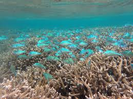not cooperating with climate alarm marine ecosystems show