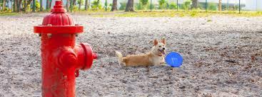 pet friendly destinations gulf shores alabama orange beach