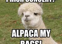 Alpaca Meme - baby alpaca meme alpaca best of the funny meme