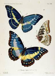 butterfly u0027s u2026 pinteres u2026