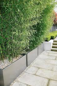 Privacy Garden Ideas This Bamboo Screening Contained Within Planters