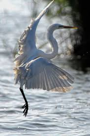 293 best a sedge of herons and cranes images on pinterest
