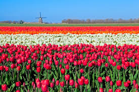 flower places index of travel destinations images netherlands places