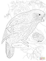kakapo parrot coloring free printable coloring pages