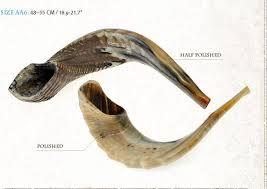 anointing horn kosher rams horn shofar by shofarot israel size 21 22 free