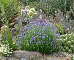native plants of spain seven u0027tough u0027 plants that could redefine a pretty garden in the