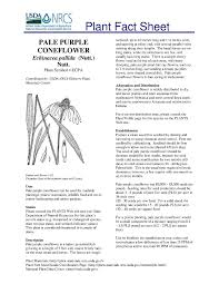 usda native plants file pale purple coneflower usda pdf wikimedia commons