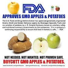 add potatoes to the list of gm foods on the market apples coming
