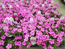 Beautiful Plants by Lots Of Beautiful Plants Parks Wholesale Plants