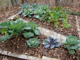 vegetable garden mulch image should i use wood chips for