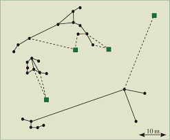 local cost minimization in ant transport networks from small
