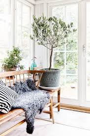 living room trees 7 types of fruit trees you can grow in your living room