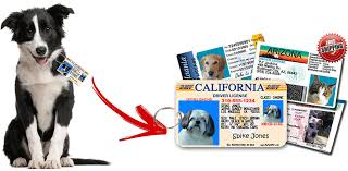 mypetdmv official pet driver s license tag for all 50 states