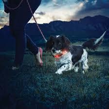 Light Up Dog Collar Night Dawg 2 Light Up Dog Collar
