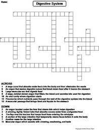 digestive system worksheet crossword puzzle by science spot tpt