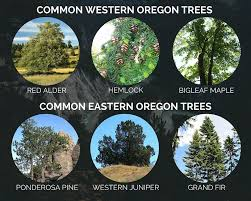 Fruit Tree Identification - the tree identification guide for oregonians northwest arbor