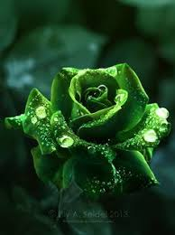 green roses green roses pictures it s all about anything green green and