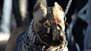 american stanford terrier y american pitbull terrier the dog breeds that are banned in the uk and why bbc newsbeat