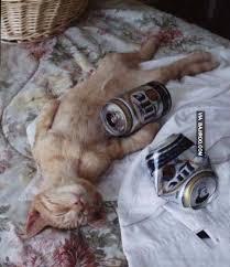 Drunk Cat Meme - 25 photos of drunken cats bajiroo com