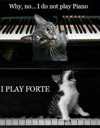Cat Playing Piano Meme - like this facebook page for great posters and quotes quotes
