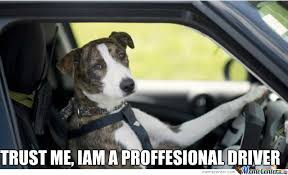 Dog Driving Meme - is it okay to trust a dog by bitchpleasedog meme center