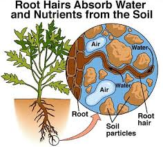 What Is Growth Movement Of A Plant Toward Light Called 3 Plant And Water Relationship