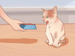 how to make raw cat food 10 steps with pictures wikihow