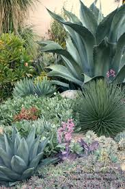 california native plant garden design 127 best low water garden design images on pinterest landscaping
