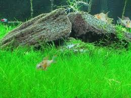 how to build an aquarium with hairgrass and moss in it from