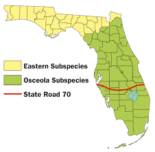 Map Of Volusia County Where To Hunt Spring Turkeys In Florida Without A Quota Permit
