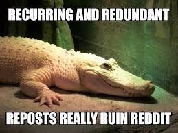 Alligator Memes - introducing alliteration albino alligator adviceanimals