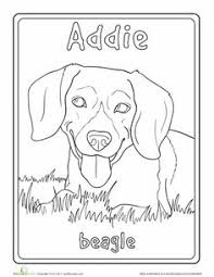 drawing beautiful beagle called willow drawings art
