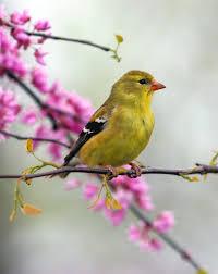 Ontario Backyard Birds Nature Canada U2013 Bird Tweet Of The Week