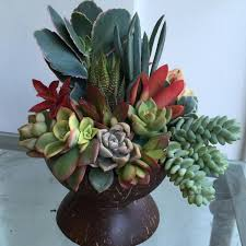 Succulent And Cacti Pictures Gallery Garden Design 72 Best Designs By Ana Calderon Images On Pinterest Succulent
