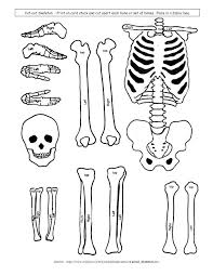Pictures Of Anatomy Of The Human Body Best 25 Skeletal System Activities Ideas Only On Pinterest