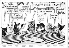 cat birthday postcard