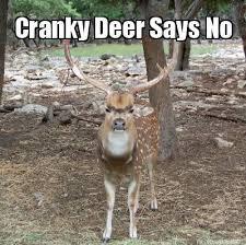 Funny Deer Memes - meme maker cranky deer meme maker lul 3 pinterest meme