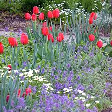 the high country gardens blog gardening tips and know how