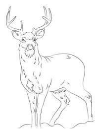 free printable deer coloring pages kids wood burning
