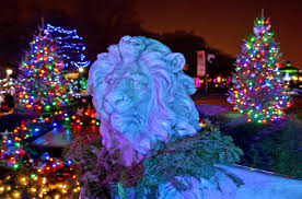 Zoo Lights Boston by December 2013 Just Beyond The City Limits Blog