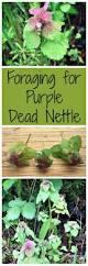 edible native plants 25 best wild edibles ideas on pinterest edible plants edible