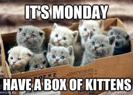 Cuteness Overload Meme - kitten cutenessoverload