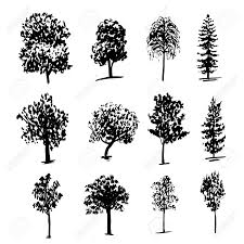 different types of trees drawing collection of 12 elements of different types of trees