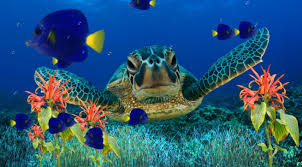 sea turtle animals pinterest coral reefs marine life and decorative window films by mary anne offers turtle and fish 2 stained glass decorative films clings and stick ons for windows and removable wall murals
