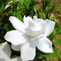Flowering Shrubs For Partial Sun - wildlife evergreen shrubs trumpet and shrub