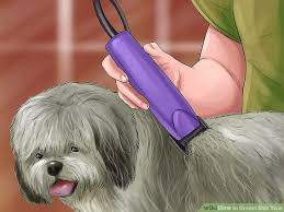 shih tzu haircuts how to groom shih tzus 14 steps with pictures wikihow